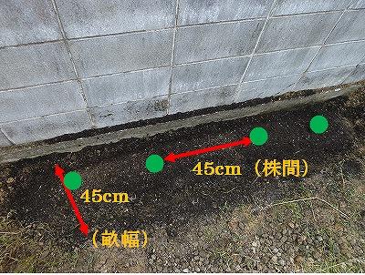 ブロッコリー植え付けの畝の作り方の画像