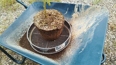 植木鉢の土を再利用する画像