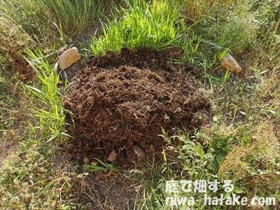 半年後の雑草堆肥の画像