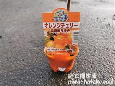 ホオズキ(オレンジチェリー)